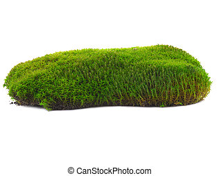 moss on a white background