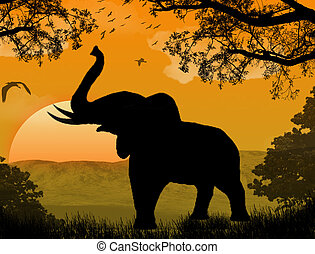 elephant at sunset - silhouette view of elephant at sunset,...