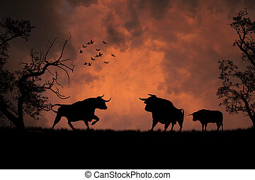 Black bulls in the sunset