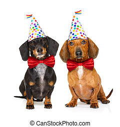 happy birthday dog - couple of two dachshund or sausage dogs...