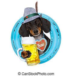 bavarian beer dachshund sausage dog - bavarian dachshund or...