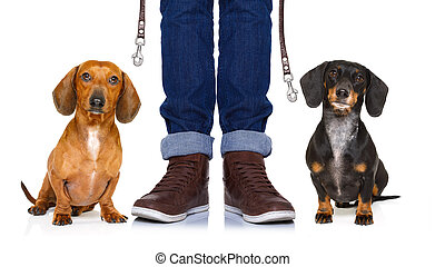 dogs and owner with leash - couple of dachshund or sausage...