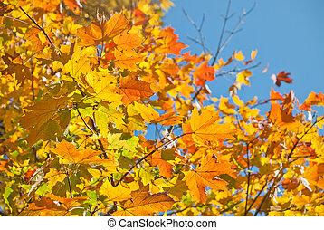 otoño, muy, hojas, superficial, foco