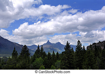 Conifers and Peaks on Beartooth Byway - Conifer forest fills...
