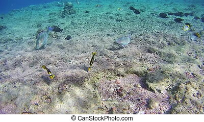 Colorful Tropical Fish on Coral Reefs in the Red Sea. Egypt....