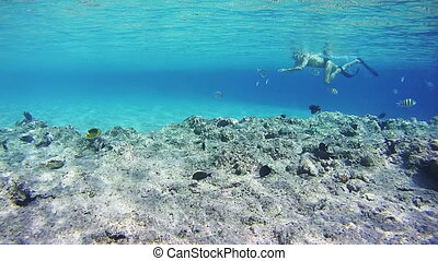 Snorkeling near a Coral Reef in the Red Sea
