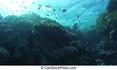 Colorful Tropical Fish on Vibrant Coral Reefs Underwater in...