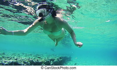 Young Woman Snorkeling on Colorful Reef in Red Sea, Egypt....