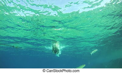 Young Man Free Dives Snorkeling and Floating Through the Frame, Underwater View in Red Sea, Egypt