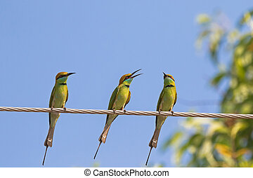 Three Green Bee eater birds perching on steel cable against...