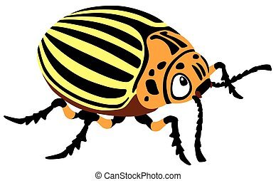 potato beetle - cartoon colorado potato beetle isolated...