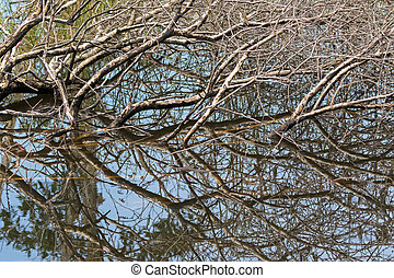Brown tree branches submerging in water showing mirror...