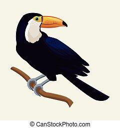 toucan exotic tropical bird