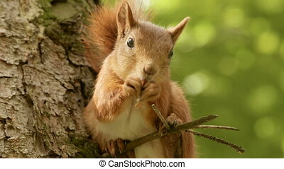 Squirrel eats on the branch