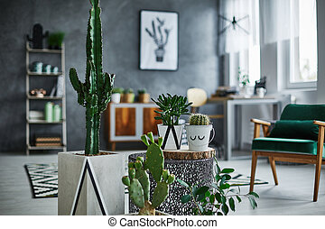 Room with cacti decorations - Modernly designed room with...