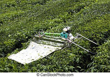 Mechanised Tea Leaf Harvester - Image of a mechanised tea...
