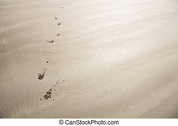 Dog footprints on sandy beach which continuing straight