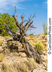 Desert Tree - A tree at the Black Dragon Canyon during the...