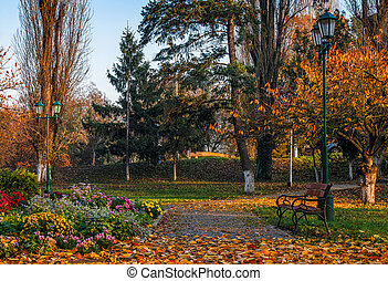 flower blossom in city park in autumn - beautiful autumn...