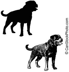 rottweiler dog silhouette and sketch illustration - vector