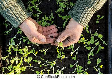 Overhead of Hands Holding a Sapling