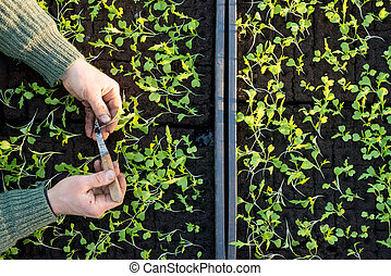 Overhead of Hands Pulling a Seedling from Seedling Bed -...