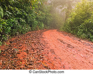 Wet red gravel path full of dried brown Autumn leaves leading to unknown in the tropical forest
