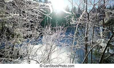 winter sunny day with hoarfrost on a tree