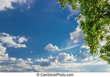 Background of the sky with clouds and maple branches -...