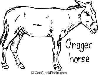 onager horse - vector illustration sketch hand drawn with black lines, isolated on white background