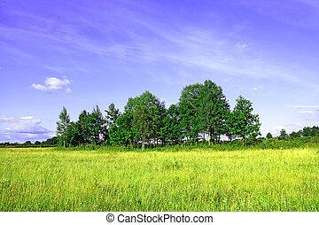 copse on autumn field