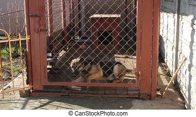 German shepherd in a cage - German shepherd lies in a cage