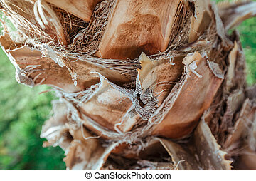 palm tree bark background texture - The palm tree bark...
