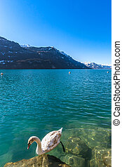 Clear water in Brienz lake, winter day