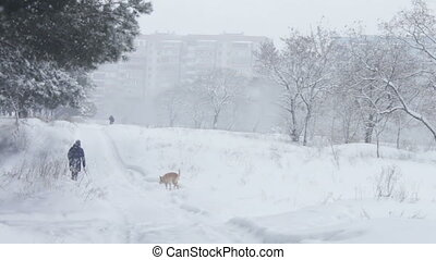 Forest snow-covered road on which the woman is walking with a dog