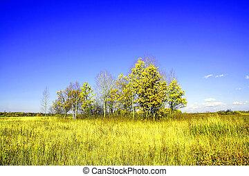 copse on  field