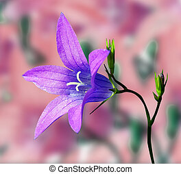 campanula on abstract background