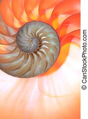 nautilus shell Fibonacci symmetry cross section spiral...