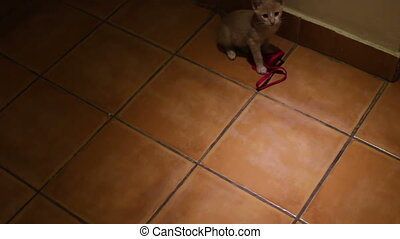 pretty little gray kitten played on the floor - small gray...