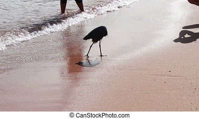 Sea bird catching a fish on the shore