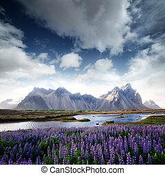 Stokksnes - Famous grass hills near Stokksnes mountains,...