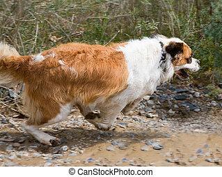St. Bernard dog on the shore of the reservoir