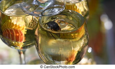 The beetle got into the wine glass with champagne and tries...
