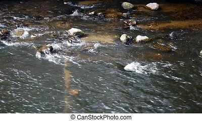 River stream with rocks