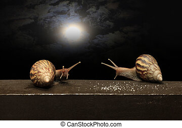Helix pomatia - Two snails against the background of the...