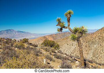 Joshua Tree National Park is a vast protected area in...