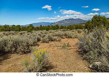 Kit Carson National Forest - A View of a portion of the Kit...