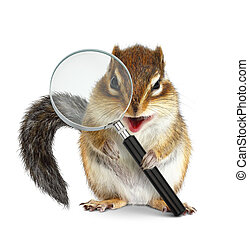 Funny animal chipmunk searching with magnifying glass, on...