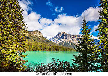 Emerald Lake in Yoho Park - The green lake surrounded by a...