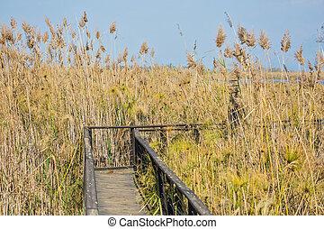 The bridge to go among the marsh grass - The narrow bridge...